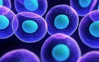 Λοιμώξεις HPV